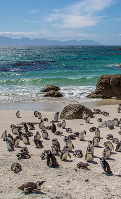 cape town tours extraordinary-cape-peninsula