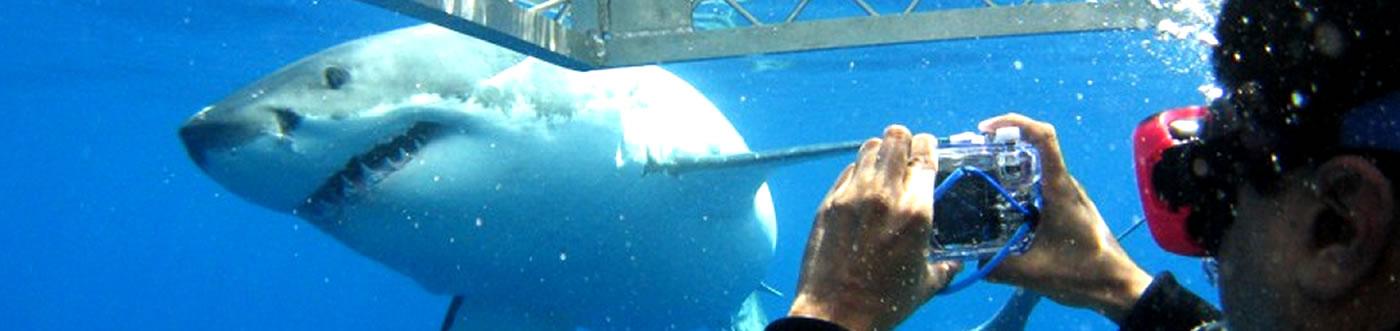 shark-tour-banner