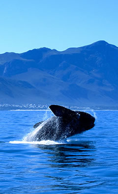 whale-coastline-tour cape town tours