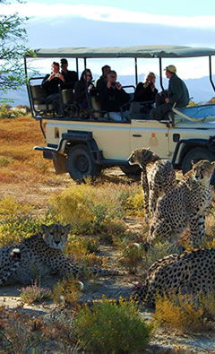 wildlife-safari-tour cape town tours